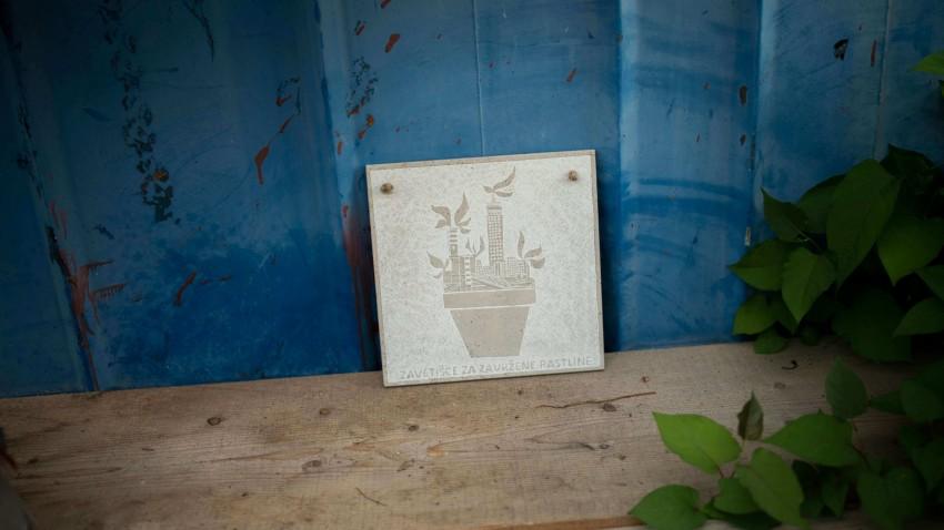 zavetišče za zavržene rastline-photo