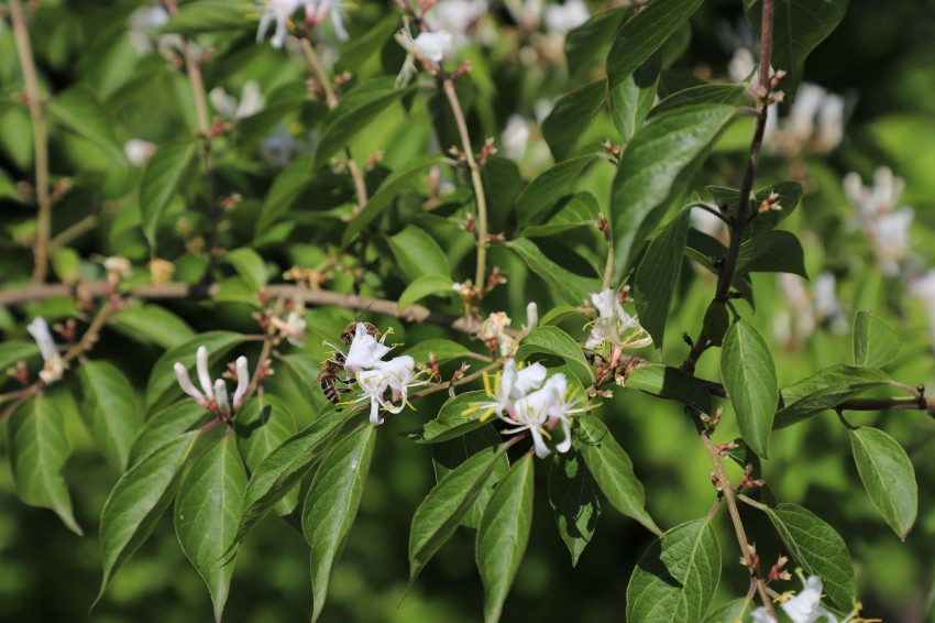 vrt karizmatičnih rastlin-photo